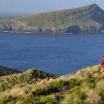 World-leading eradication on Antipodes Island