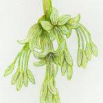 NZ's sneeziest plants
